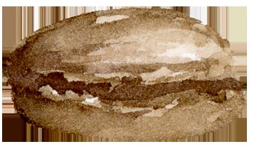 Digital Paperie - Brown Macaron